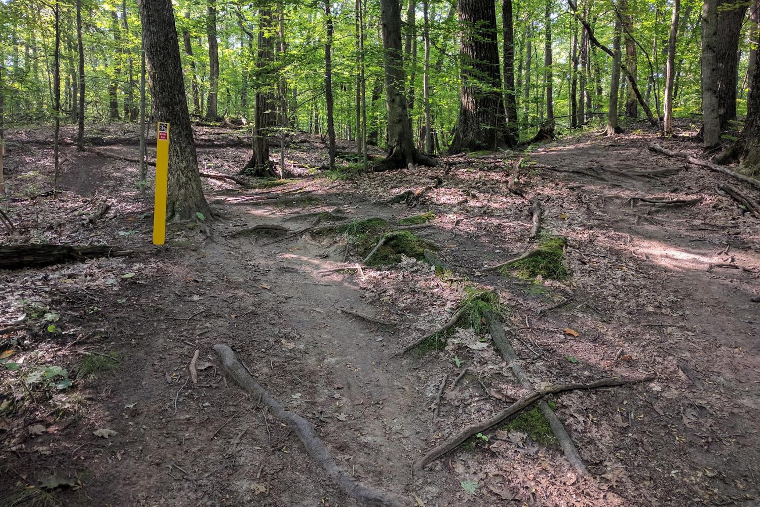 mountain bike trail with roots
