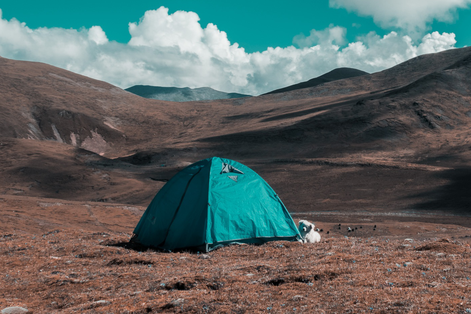 best tents for camping with dogs