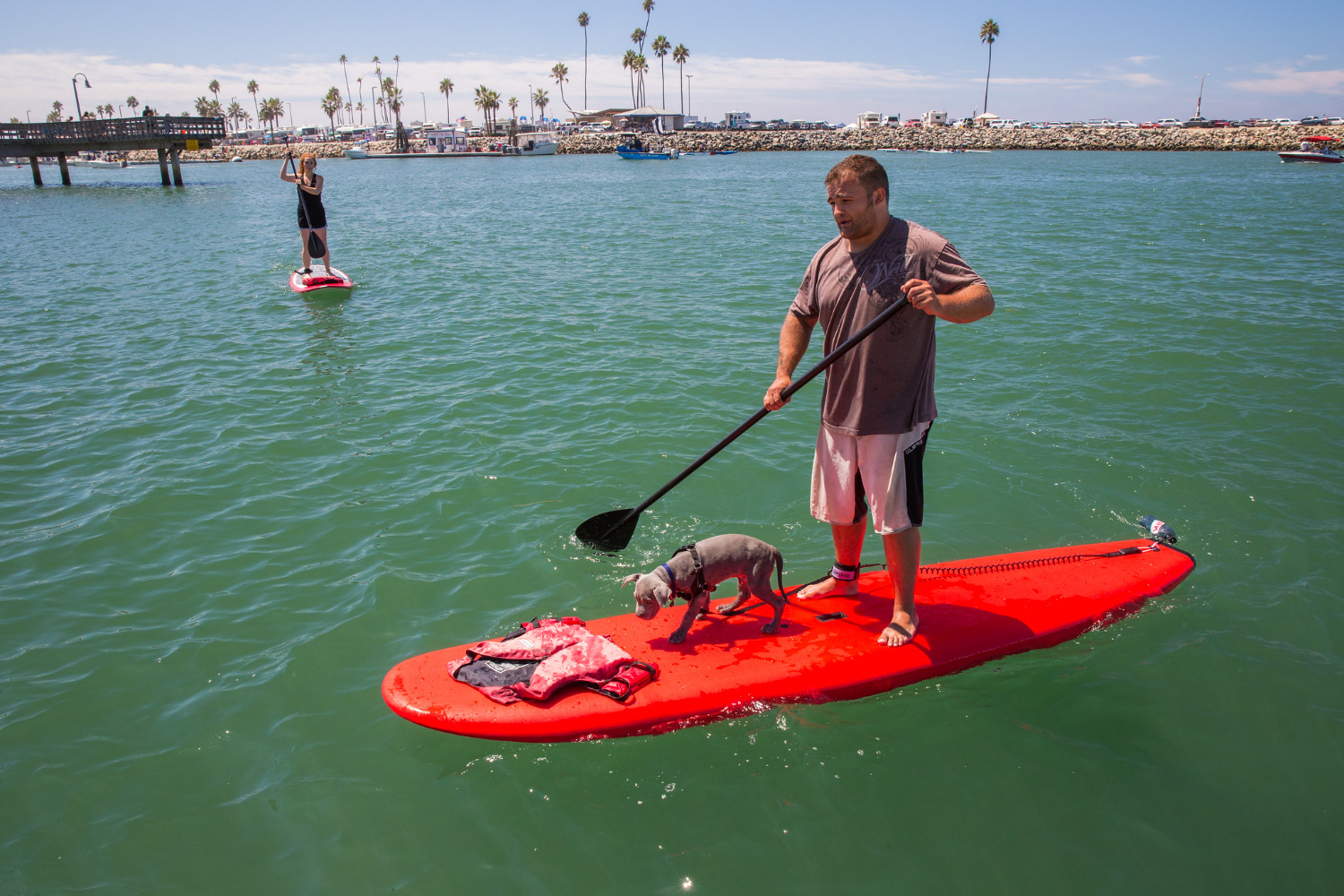 paddle boarder with a small dog